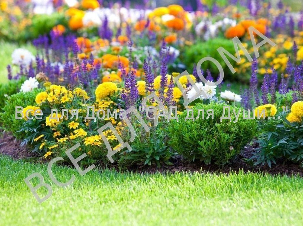 Цветы для клумбы многолетники
